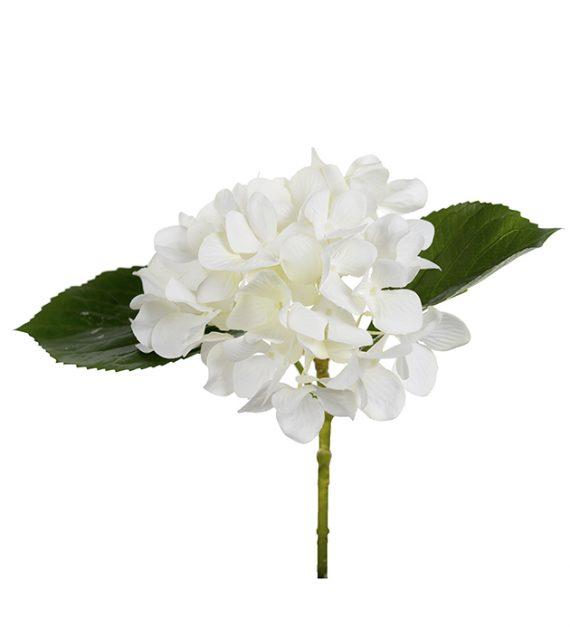Mr Plant Hortensia 25cm